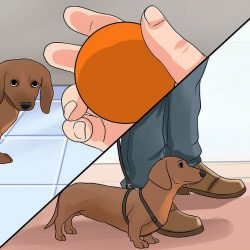 نگهداری سگ